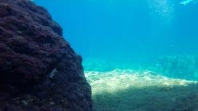 Undervattens- landskap i Sardinia Arkivbilder