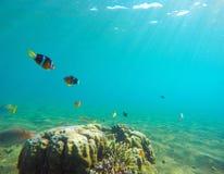 Undervattens- landskap med den tropiska fisken Clownfish undersea foto Arkivfoton
