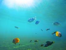 Undervattens- landskap med den tropiska fisken Havsvatten nära den exotiska ön med marin- invånare Fotografering för Bildbyråer