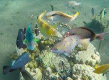 Undervattens- landskap med den tropiska fisken Matning av akvariefiskar i lös natur Royaltyfri Foto