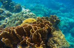 Undervattens- landskap med den tropiska fisken Plats för korallrev för akvariumbakgrund eller snorklabaner Arkivbild