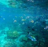Undervattens- landskap med färgrika korallfiskar arkivbilder