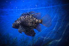 Undervattens- landskap med fiskar i oceanarium Arkivfoton