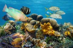 Undervattens- landskap med fisken i en korallrev Arkivfoto