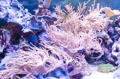 Undervattens- landskap med koraller Royaltyfria Bilder