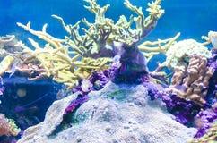 Undervattens- landskap med koraller Royaltyfri Foto