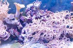 Undervattens- landskap med koraller Arkivbild