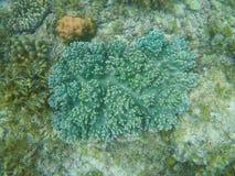 Undervattens- landskap med korallreven Blått korallbildande Royaltyfria Foton