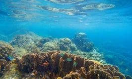 Undervattens- landskap med korallreven och tropiska fiskar Blå havssikt med marin- faunor Royaltyfri Fotografi