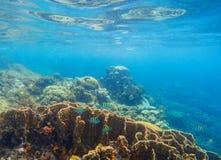 Undervattens- landskap med korallreven och tropiska fiskar Blå havssikt med marin- faunor Arkivfoton