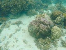 Undervattens- landskap med korallreven Olika korallformer Tropiska fiskar i lös natur Royaltyfri Fotografi