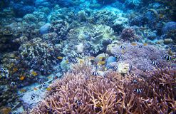 Undervattens- landskap med korallreven Undersea platsfoto Arkivfoton
