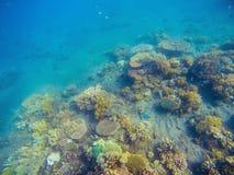 Undervattens- landskap med korallreven Ungt korallbildande med havsväxt Fotografering för Bildbyråer