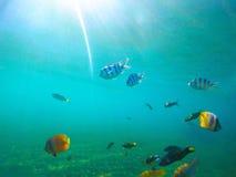 Undervattens- landskap med tropiska fiskar Solig undersea plats med korallfiskar Arkivbilder
