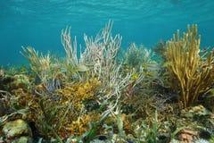 Undervattens- landskap på reven med mjuka koraller Royaltyfri Fotografi