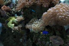 undervattens- lifes Royaltyfri Fotografi