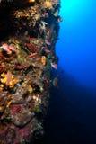 undervattens- liggande fotografering för bildbyråer