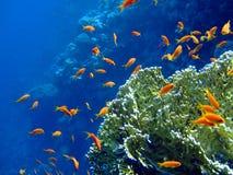 undervattens- liggande Arkivbild