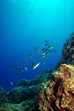 undervattens- liggande ii Royaltyfria Foton