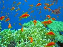 Undervattens- liv av det tropiska havet Arkivbild