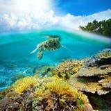 Undervattens- liv av en korallrev Arkivfoton