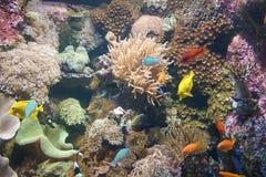 Undervattens- liv med kulöra fiskgrupper Arkivfoto