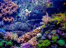 undervattens- livstid Arkivbild