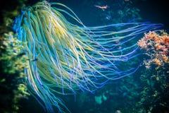 undervattens- livstid Royaltyfri Bild
