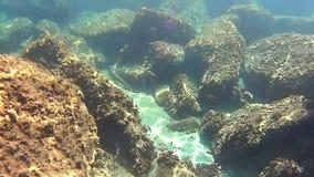 undervattens- livstid lager videofilmer