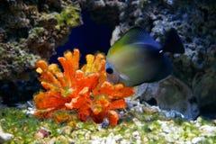 undervattens- livstid arkivbilder