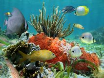 Undervattens- livstid av en korallrev Royaltyfri Fotografi