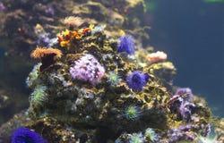 Undervattens- livstid och färger royaltyfria foton