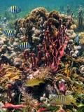 undervattens- livstidsflotta Royaltyfria Foton
