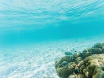 undervattens- marin- liv på korallrever vektor illustrationer