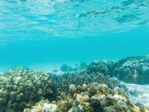 undervattens- marin- liv på korallrever royaltyfri illustrationer