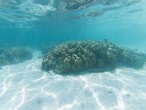 undervattens- marin- liv på korallrever stock illustrationer