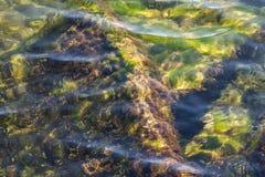 Undervattens- mossa Arkivbilder