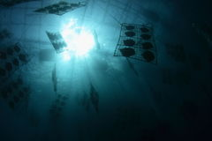 undervattens- musslalantgårdpärla Arkivbilder