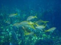 Undervattens- near korallrev för fisk arkivbild
