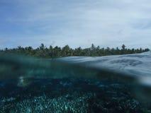 Undervattens- på en tropisk ö och palmträd och på den samma ten Royaltyfri Foto