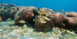 Undervattens- panorama i ett karibiskt hav för korallrev Arkivbilder