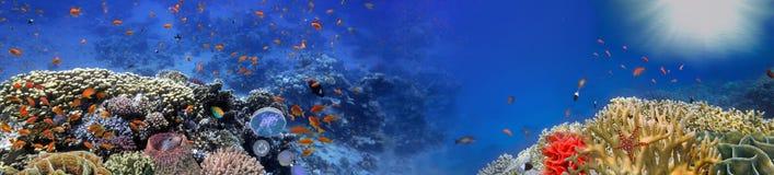 Undervattens- panorama och korallrev och fiskar Royaltyfria Foton
