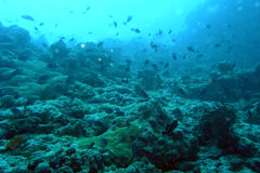 undervattens- paradis Arkivfoton