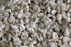 undervattens- pebble Arkivfoton