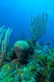 Undervattens- plats med den färgrika tropiska fisken nära havsreven Arkivbilder