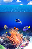 Undervattens- plats med den tropiska fisken Royaltyfria Bilder