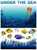 Undervattens- plats med fisken och havsväxt Royaltyfri Fotografi