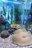 Undervattens- platser Arkivfoto