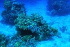 undervattens- rött hav Royaltyfri Bild