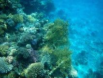 undervattens- rött hav för koraller Fotografering för Bildbyråer